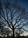 Luce solare che splende attraverso i rami di albero fotografia stock