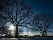 Luce solare che splende attraverso i rami di albero Fotografia Stock Libera da Diritti