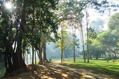Luce solare che splende attraverso il grande albero immagini stock