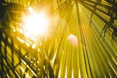 Luce solare che splende tramite le foglie della palma Immagine Stock
