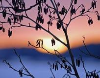 Luce solare chiara Fotografie Stock Libere da Diritti