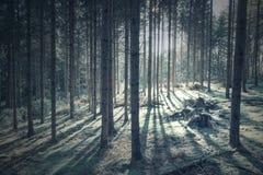 Luce solare con le ombre dell'albero nella foresta fotografie stock libere da diritti
