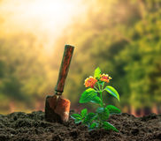 Luce solare del agaisnt della pianta dei fiori e dello strumento di giardinaggio bella nel g Fotografia Stock