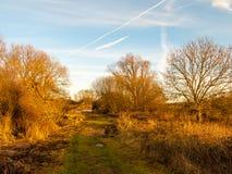 Luce solare del cielo di direzione di modo del paesaggio del paese sul autu nudo di inverno Fotografia Stock Libera da Diritti