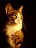 Luce solare del gatto Fotografia Stock
