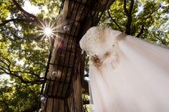 Luce solare del vestito da sposa Immagini Stock