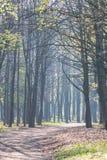 Luce solare delicata di mattina nella foresta di primavera immagini stock