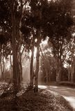 Luce solare della foresta Fotografie Stock