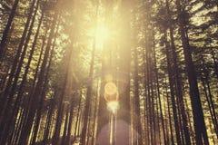 Luce solare della foresta Fotografia Stock Libera da Diritti