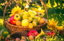 Luce solare della frutta fresca del canestro del frutteto di autunno Immagini Stock Libere da Diritti