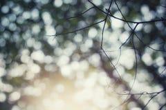 luce solare di estate nell'ambito del ricciolo Fotografie Stock Libere da Diritti