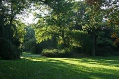 Luce solare di estate in parco Immagine Stock