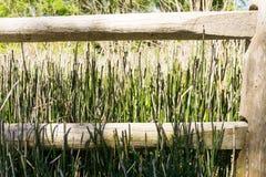 Luce solare di legno di giorno di verde della plancia dell'erba a lamella del recinto fotografia stock