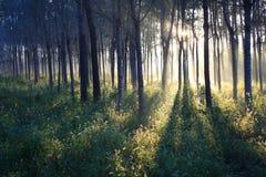 Luce solare di mattina Fotografia Stock Libera da Diritti