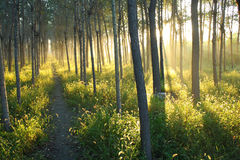 Luce solare di mattina Fotografie Stock Libere da Diritti