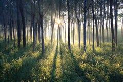 Luce solare di mattina Fotografia Stock
