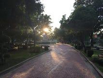 Luce solare di mattina Immagini Stock