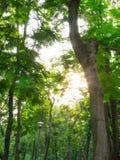 Luce solare di mattina Immagine Stock