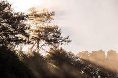 Luce solare di mattina che splende attraverso la foresta nebbiosa Fotografie Stock