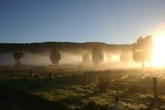 Luce solare di mattina e la nebbia di autunno Fotografie Stock Libere da Diritti