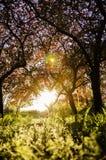 Luce solare di mattina nel parco immagini stock libere da diritti