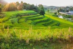 Luce solare di mattina sopra i terrazzi del riso Fotografia Stock Libera da Diritti