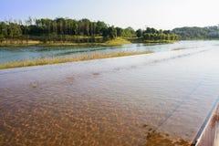 Luce solare di pomeriggio su acqua d'increspatura dello stagno della riva del lago Fotografie Stock Libere da Diritti