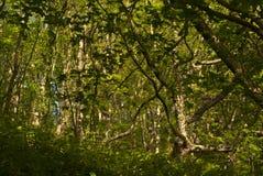 Luce solare di sera della giungla Fotografie Stock Libere da Diritti