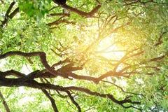 Luce solare di Sunny Green Trees Nature Wood di estate fotografia stock