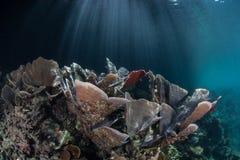 Luce solare e coralli fragili Immagine Stock Libera da Diritti