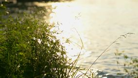 Luce solare ed il fiume stock footage