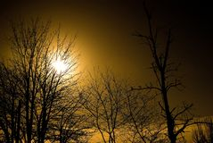 Luce solare filtrata in alberi Fotografie Stock Libere da Diritti