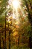 Luce solare in foresta Fotografia Stock