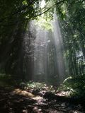 Luce solare in foresta Immagini Stock Libere da Diritti