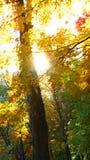 Luce solare in foresta in autunno Fotografie Stock Libere da Diritti