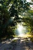 Luce solare in foresta verde Immagini Stock