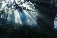 Luce solare in foreste Immagini Stock