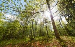 Luce solare luminosa attraverso gli alberi nella scena della foresta di estate al parco naturale di Aulanko in Finlandia Immagine Stock