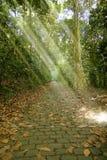 Luce solare magica Immagine Stock Libera da Diritti