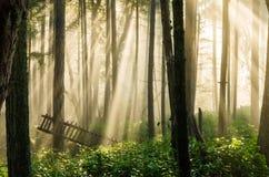 Luce solare nebbiosa della foresta Fotografie Stock