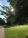Luce solare negli alberi Immagine Stock Libera da Diritti