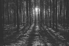 Luce solare nel legno Immagine Stock