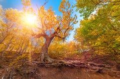 Luce solare nella foresta Fotografie Stock Libere da Diritti