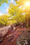 Luce solare nella foresta della montagna di estate Fotografia Stock