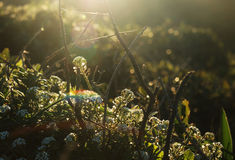 Luce solare nella natura immagini stock