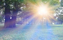 Luce solare sbalorditiva che irradia attraverso gli alberi Fotografia Stock Libera da Diritti