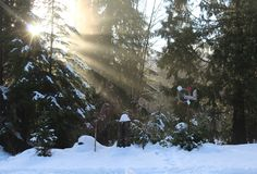 Luce solare Starbright Immagine Stock