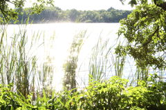 Luce solare su acqua Immagine Stock Libera da Diritti