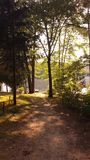 Luce solare tramite le foglie dell'albero Fotografia Stock