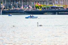 Lucerna Szwajcaria, Kwiecień, - 29, 2017: Łabędź w Jeziornej lucernie Obraz Royalty Free